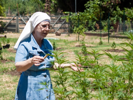 Sisters of the Valley - San Joaquin Cannabis