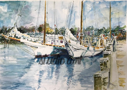 Shoreline Muse