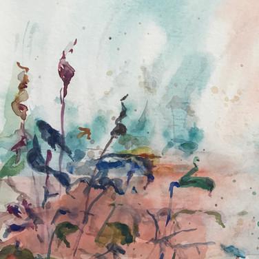 7.25.2017 Crane Pond 2