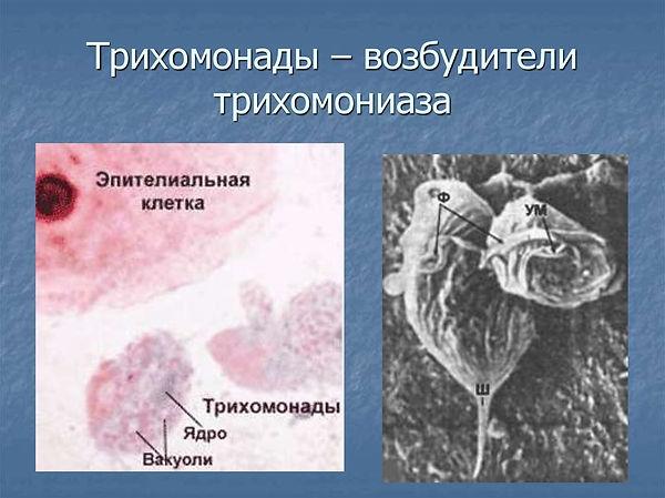 slide-7.jpg