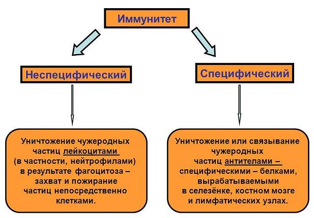 slide_79.jpg