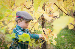 Boy Picking Grapes Hereford