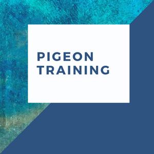 Pigeon Training