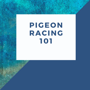 Pigeon Racng 101