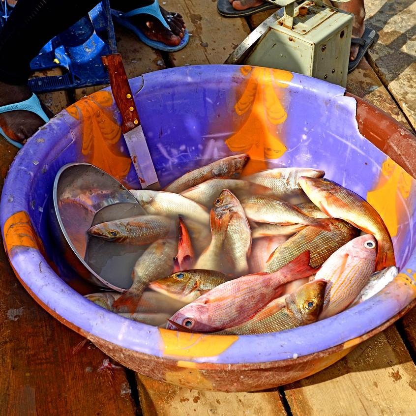 pêche_Cap_Vert_FB