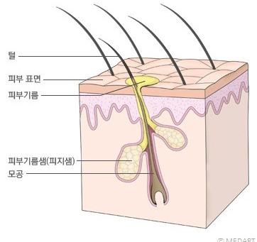 [방배 비앤유] 지성 vs 건성 피부
