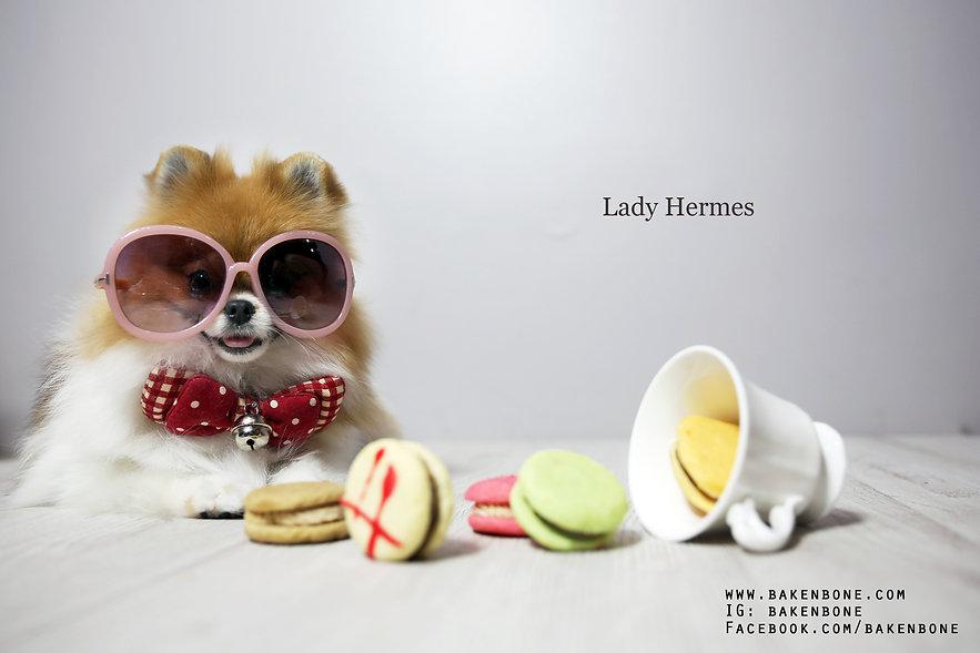 เค้กสุนัข, dog bakery, เค้กแมว, cat bakery