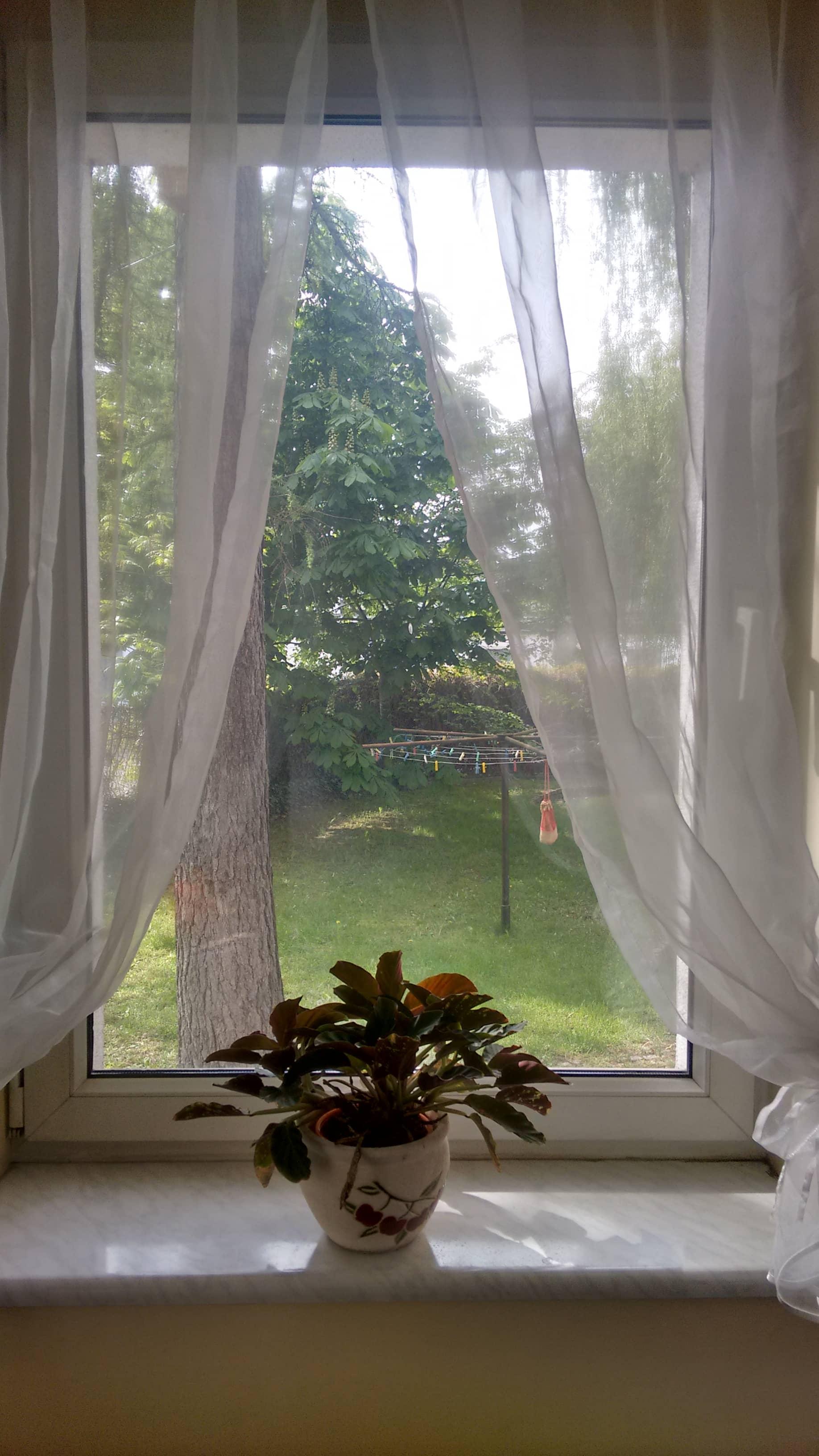 Folia Wenecka na okna M Silver 35 - widok ze środka domu w pogodny dzień