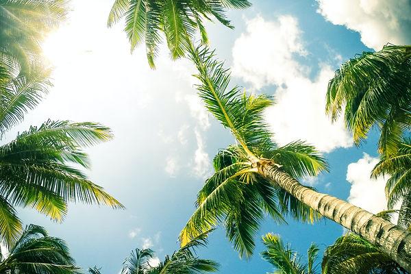 palm trees-unsplash.jpg