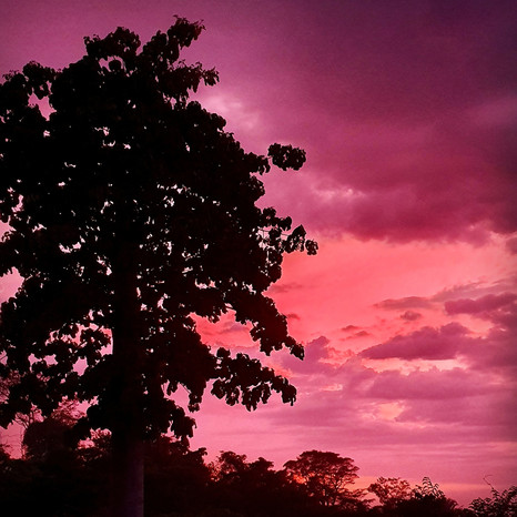 Our Cuipo tree at sunset.