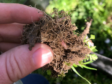 Your Soil has a Sweet Tooth