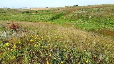 BDF prairie panorama.jpg