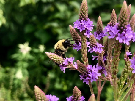 We Must Heal the Soil to Save the Bees