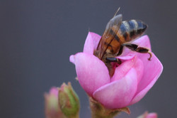 Bee Butt, March 2013