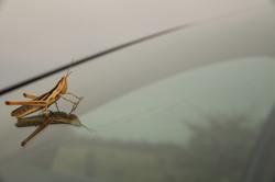 Grasshopper, June 2012