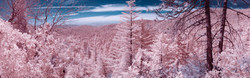 Idyllwild in Infrared