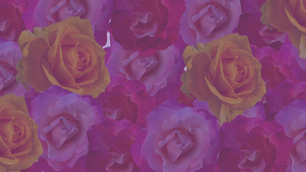 Roses%20background_edited.jpg