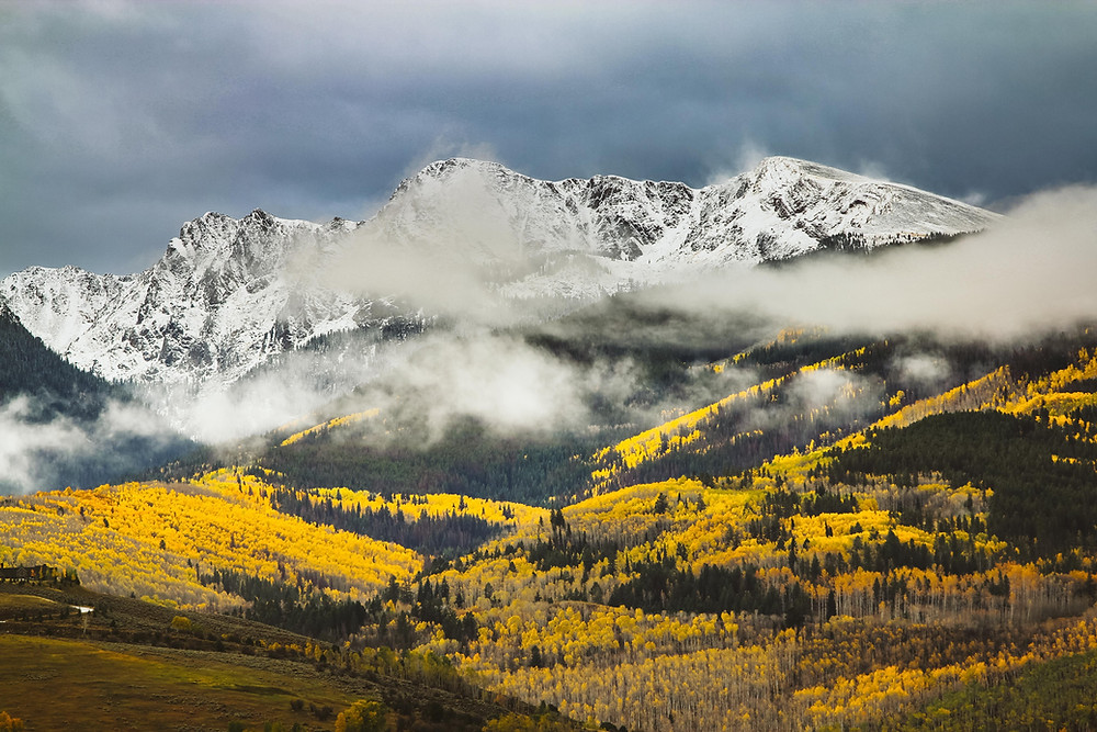 Huge aspen meadow with snow covered mountain