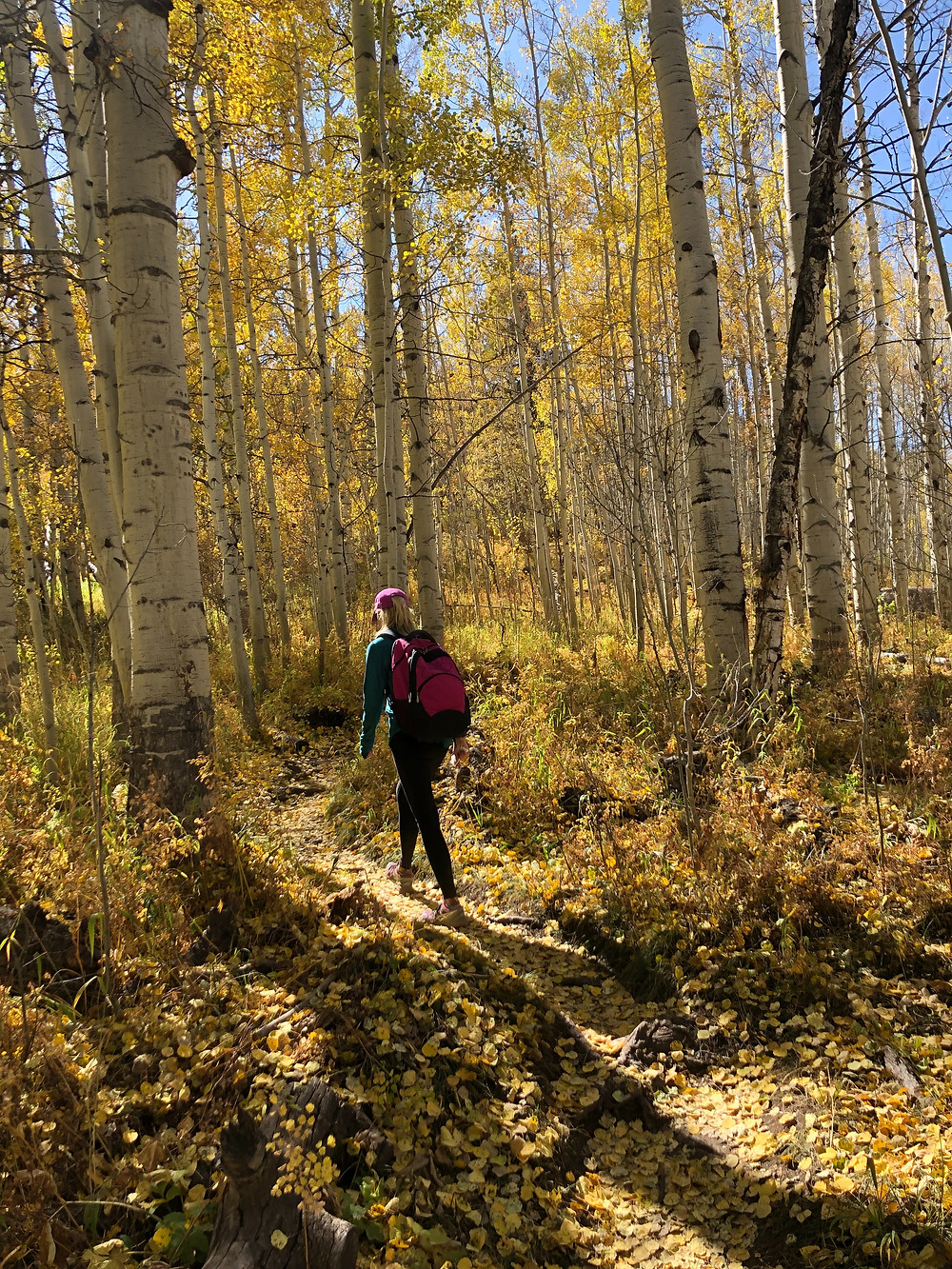 Girl hiking in the fall aspen grove.