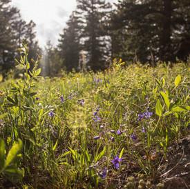 Mountain Flowers.jpg
