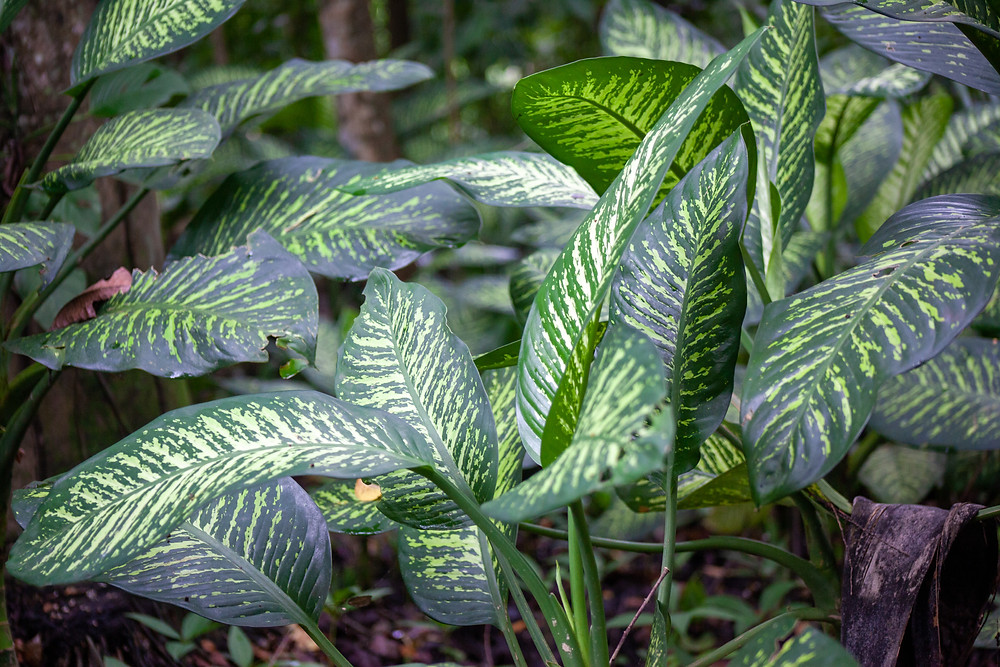 Vibrant green leafy plant in forest