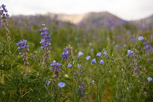 CB Flowers 11.jpg