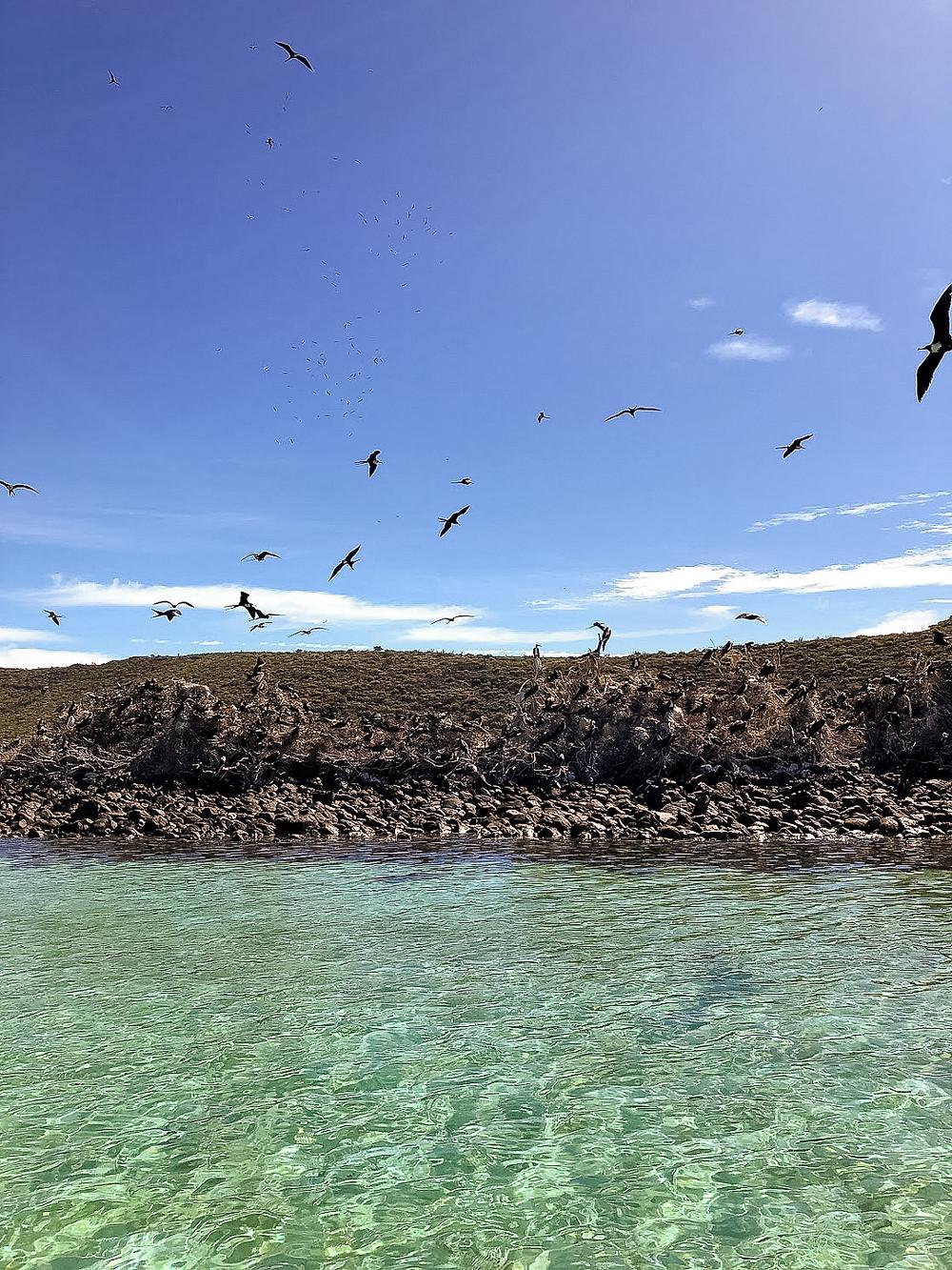 Sea birds along the Sea of Cortez.