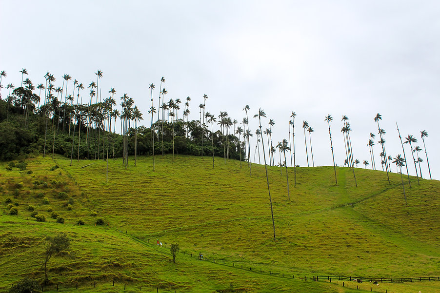 Cocora Valley.jpg