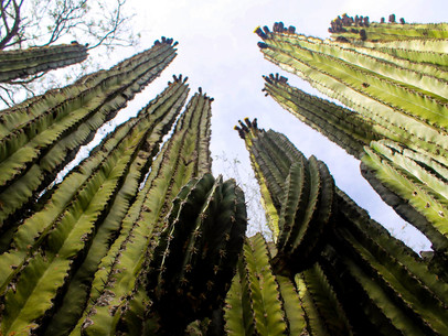 MX Cactus.jpg
