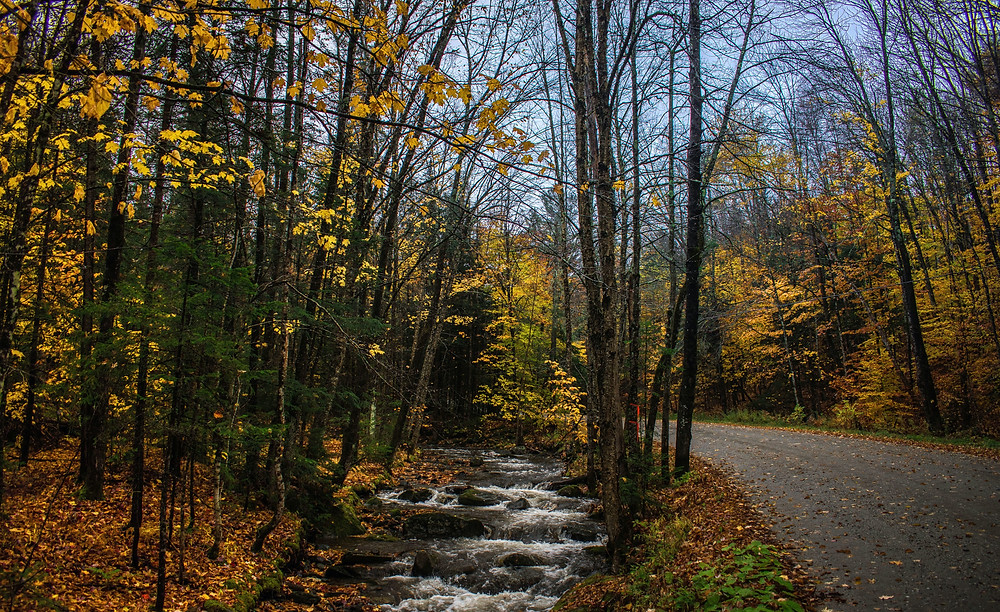 Fall foliage and road in Vermont