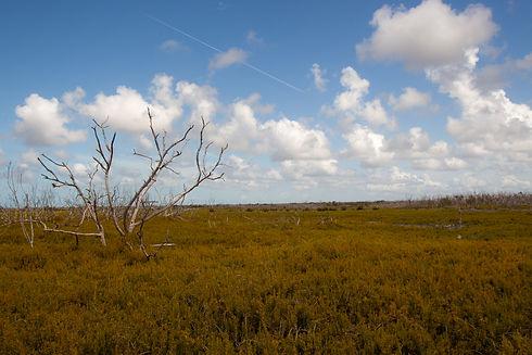 Everglades Prairie.jpg