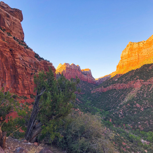 Sunset Glow in Zion NP