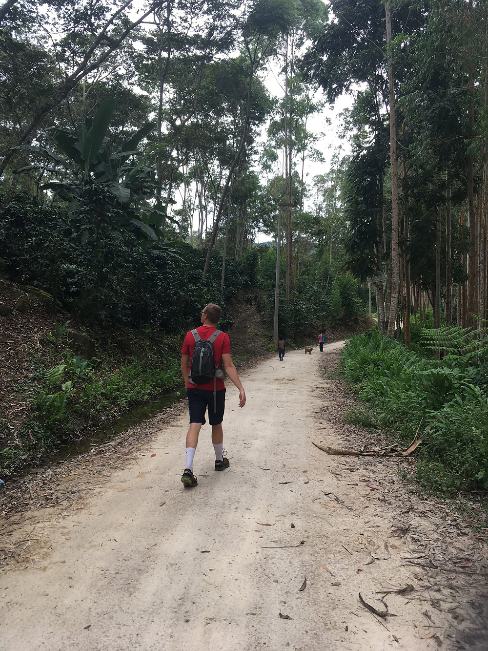 Person in red walking along jungle dirt road.