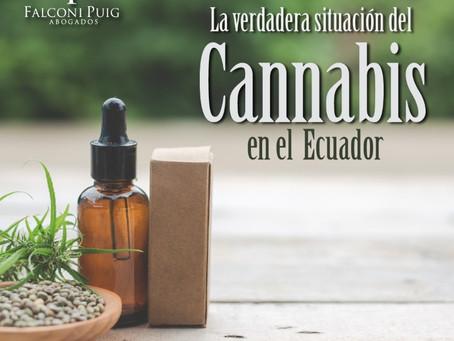 La Verdadera Situación del Cannabis en el Ecuador