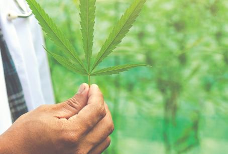 La industria del cannabis, ¿qué camino debemos seguir?