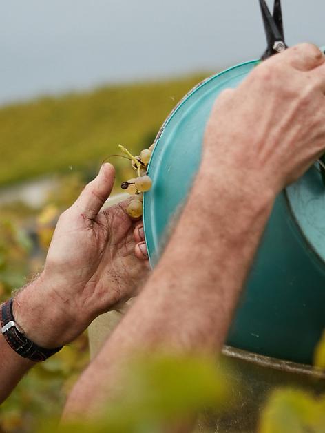 Vignerons Lavaux Vin Bio