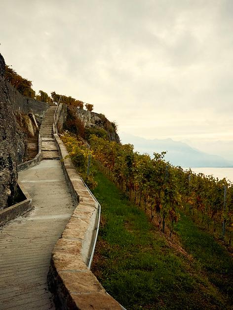 Vue Lavaux Vin Bio