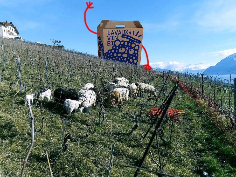 Box Lavaux Vin Bio