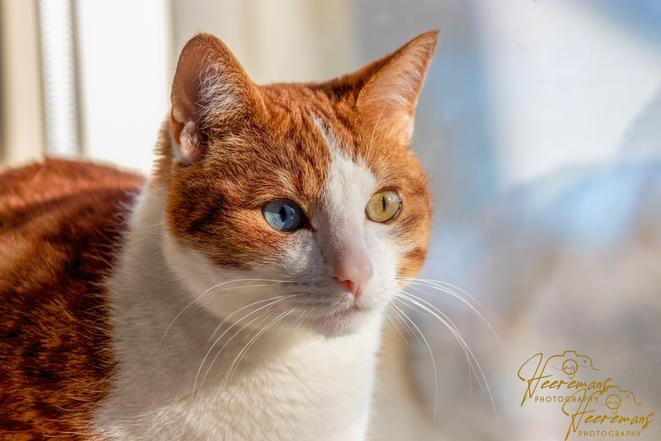 portret kat