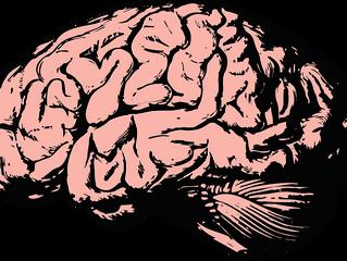 Человек использует мозг на 10%. Правда или миф?