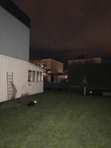 På bilden finns det tre katter. Ser du dem? Leta efter de lysande ögonen.