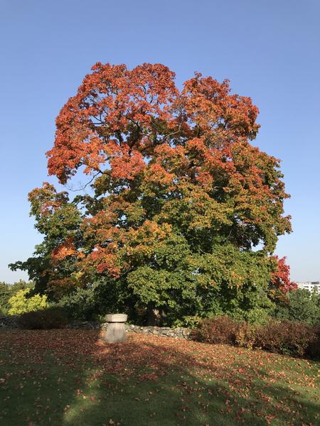 Trädet på herrgården