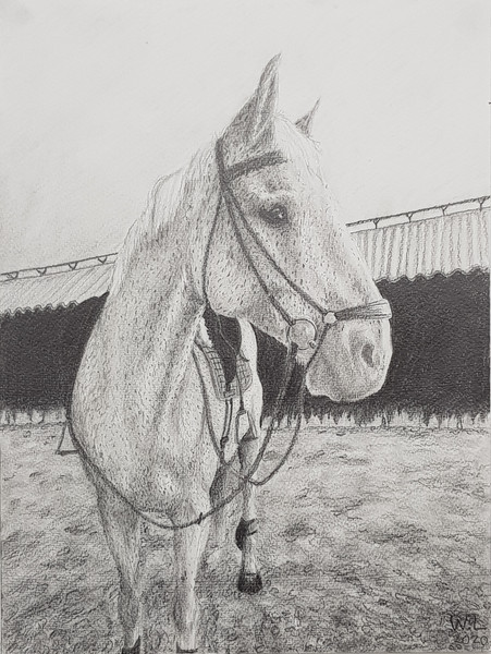 älsklingshäst