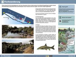 6 Fischwanderung