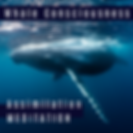 Whale Consciousness Assimilation Meditat