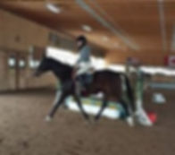 horse equine board boarding horseback riding lessons