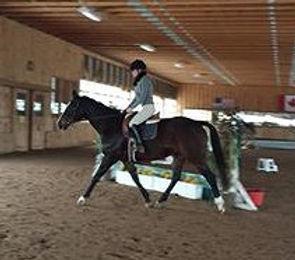 horse equine board boarding horseback riding lessons