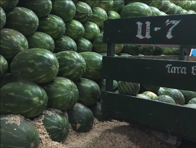Aura Cocina Mexicana | Market Tour | Central de Abasto | Watermelons
