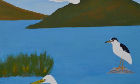 Closeup, herons