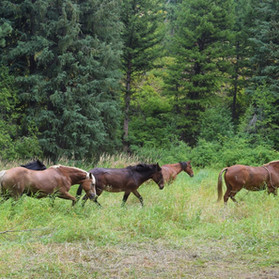 ponies.jpg
